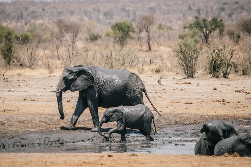Namibia und Botswana